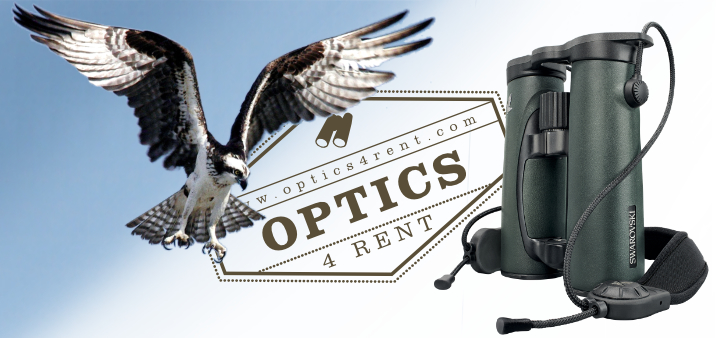 Optics4Rent - Renting quality Swarovski Binoculars and Spotting Scopes for Safari, birdwatching and backyard wildlife viewing.